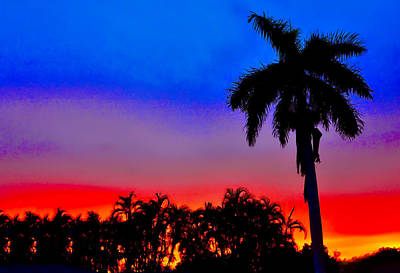 Photograph - Gator Nation Sunset by Don Durfee
