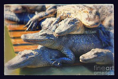 Photograph - Gator Pals by Carol Groenen