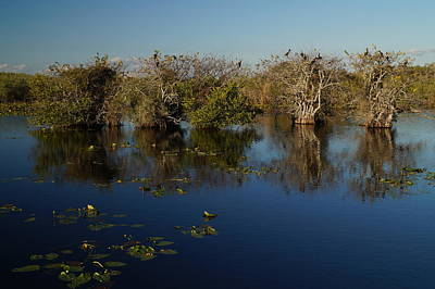 Mountain Landscape Rights Managed Images - Gator Pond and Anhinga Trees Royalty-Free Image by John Wall