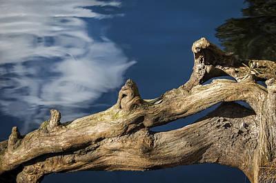 Photograph - Gator Root by Carolyn Marshall
