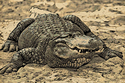 Photograph - Gator Waiting by Alice Gipson