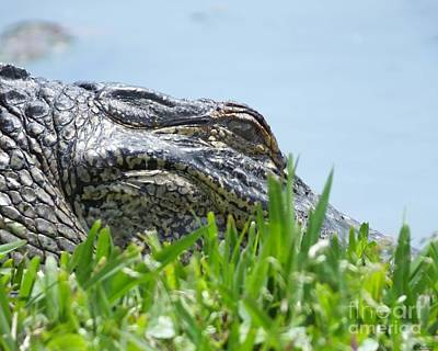 Photograph - Gator Watching by Lizi Beard-Ward