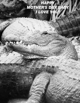 Photograph - Gator's Love Baby by Belinda Lee