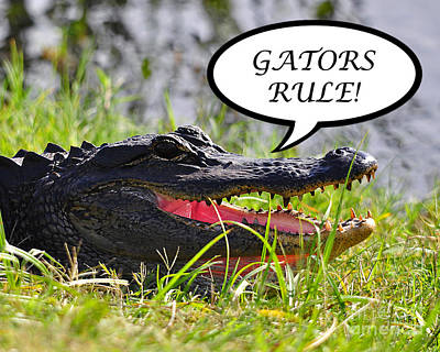 Gators Rule Greeting Card Art Print by Al Powell Photography USA