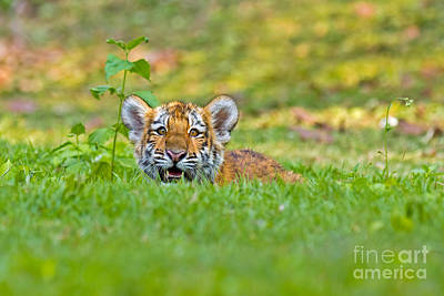 Gauging The Distance Art Print by Ashley Vincent