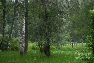 Photograph - Gauja National Park Latvia by Rudi Prott