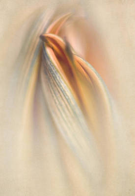 Photograph - Gazania Abstract IIi by David and Carol Kelly