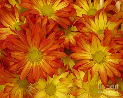 Painting - Gazania Painterly by Peter Piatt