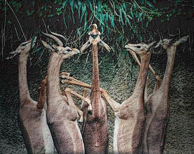 Photograph - Gazelle Quintet by Nadalyn Larsen