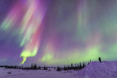 Observer Photograph - Gazing At A Colourful Twilight Aurora by Alan Dyer
