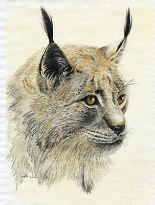 Bobcats Drawing - Gazing Lynx by Phyllis Howard