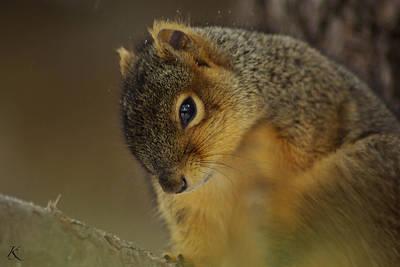 Gazing Squirrel Art Print