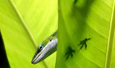 Photograph - Gecko 1 by Dawn Eshelman
