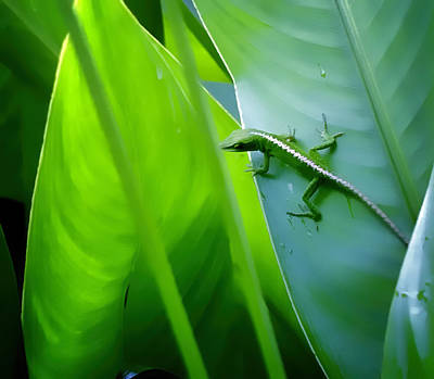 Photograph - Gecko 3 by Dawn Eshelman