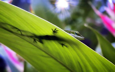 Photograph - Gecko 5 by Dawn Eshelman