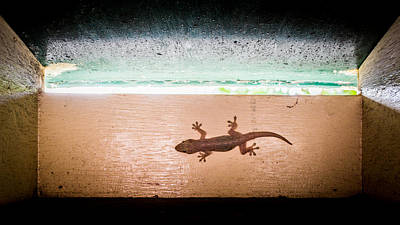 Photograph - Gecko Delivery by Peta Thames