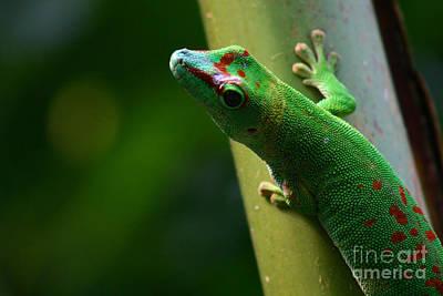 Gecko Art Print by Karin Brockmueller