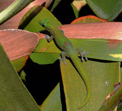 Photograph - Gecko by Pamela Walton