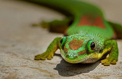 Photograph - Gecko Portrait by Linda Villers
