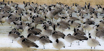 Photograph - Geese Abstract 2 by Dave Dilli