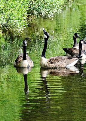 Geese And Green Art Print