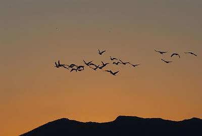 Moody Trees - Geese at Dawn by Bill Kraft