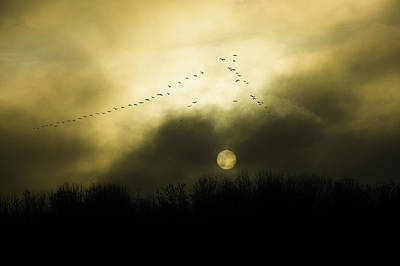 Geese At Sunset Art Print