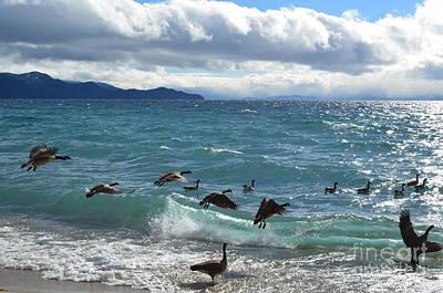 Geese Braving Lake Tahoe Art Print by Greg Cross