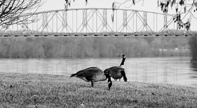 All American - Geese By The Ohio by Jan M Holden
