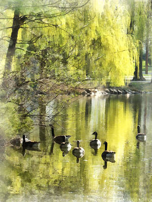 Photograph - Geese By Willow by Susan Savad