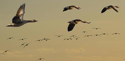 Geese Charter Art Print