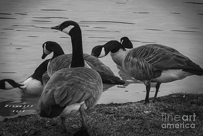 Photograph - Geese Family by Melissa Messick