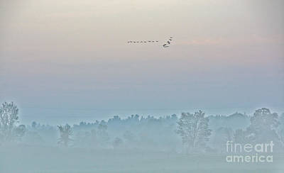 Photograph - Geese Flying In Fog by Cheryl Baxter