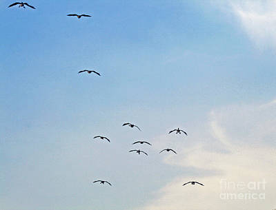Photograph - Geese Flying by Karen Adams