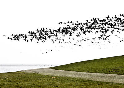 Photograph - Geese by Frits Selier