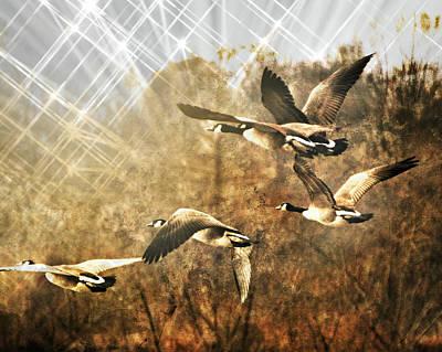Geese In Flight 2 Art Print