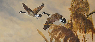 Canadian Geese Painting - Geese In Flight by Johanna Lerwick