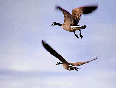 Photograph - Geese In Flight by John Crothers