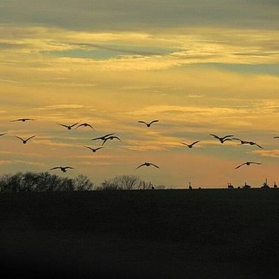 Sundown Wall Art - Photograph - Geese In Flight by Kelli Stowe