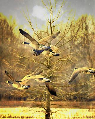 Geese In Flight Art Print