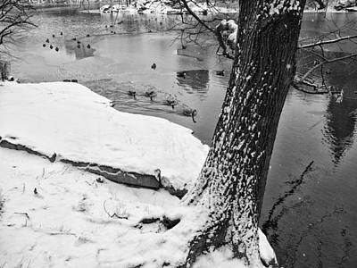 Photograph - Geese In Icy Water by Cornelis Verwaal