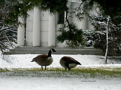 Art Print featuring the photograph Geese In Snow by Kathy Barney