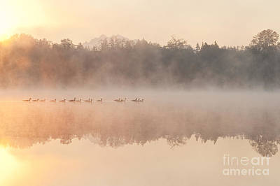 Geese In Sunrise And Fog, Lake Cassidy Art Print by Jim Corwin