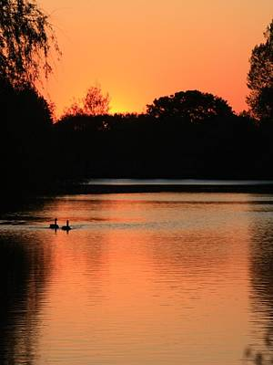 Photograph - Geese In The Sunset by Jeremy Hayden