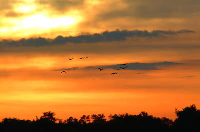Geese Into The Sunset Art Print