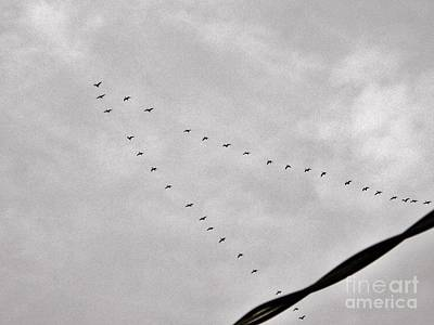 Photograph - Geese by Judy Via-Wolff