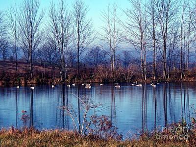 Geese On A Mirror Original