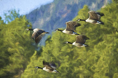 Geese On A Mission Art Print