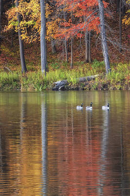 Geese On Beebe Lake Art Print by Michele Steffey