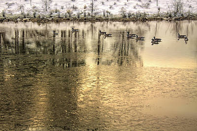 Photograph - Geese On Golden Pond by Jason Politte